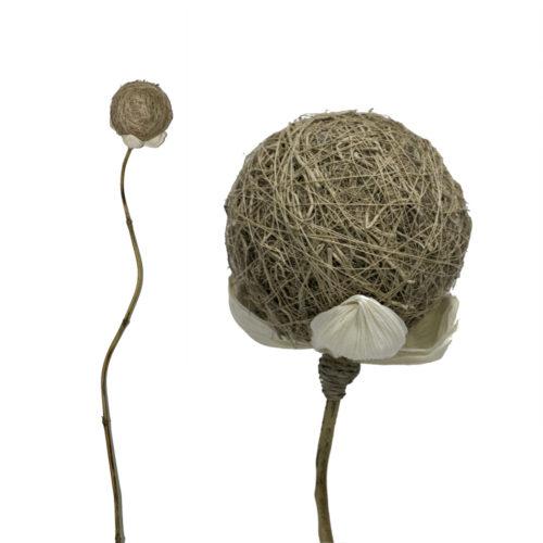 Root Ball  BBC-004